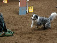 Tierheim Hoppers 2009 und Training