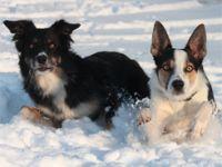 Österreichurlaub mit Schnee!? :-)